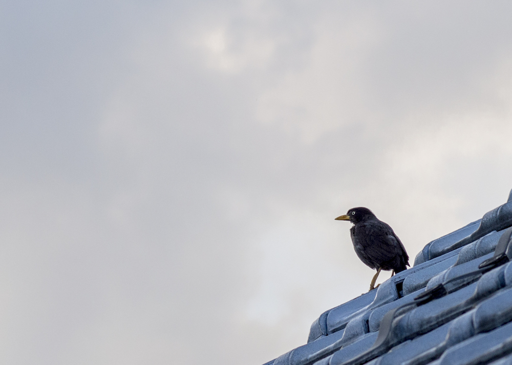 Waiting for The Raven King with a bird perched on the roof